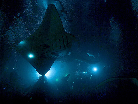 manta_night_dive_640x480.jpg