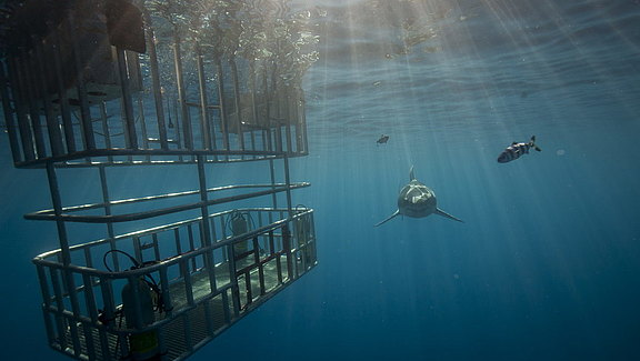 wirodive-guadalupe_socorro_repositioning_trip (1).jpg