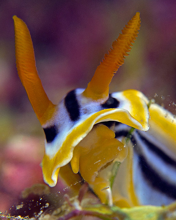 nudibranch_portrait.jpg