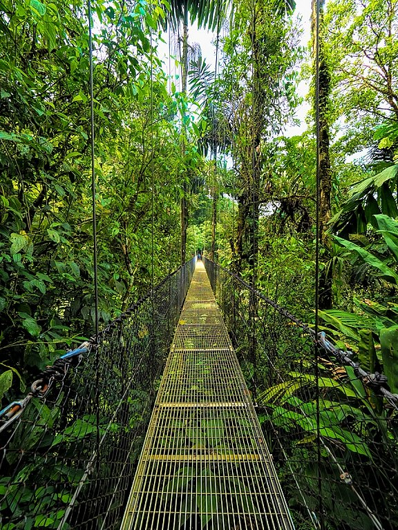 path through the rain forest.jpg