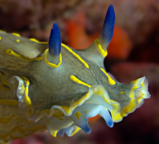 nudibranch_1a.jpg